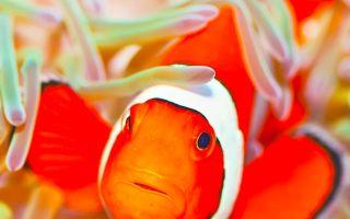 Приложение Clownfish for Discord